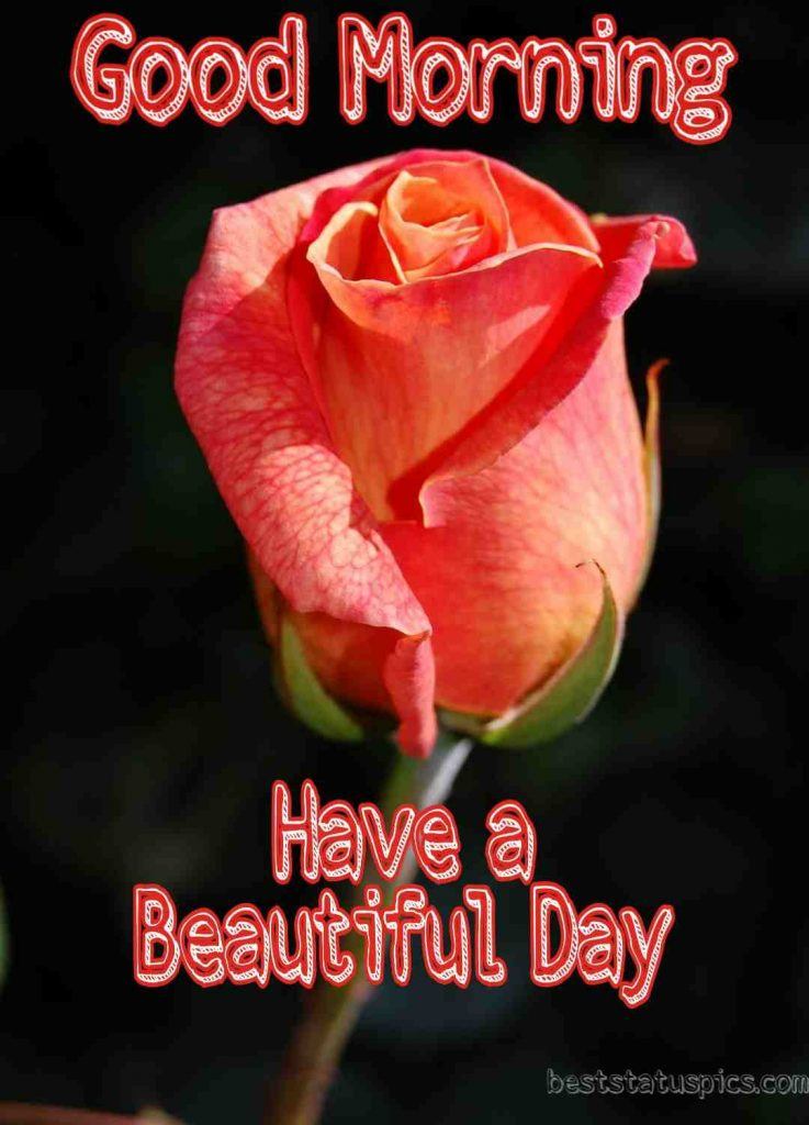 Good morning have a beautiful day with rose photo