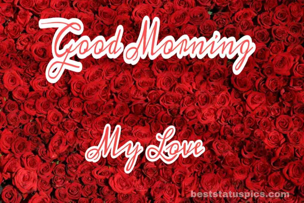 Good morning my love with roses photo pic
