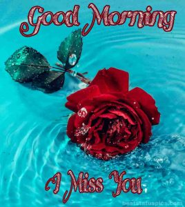 Good Morning red rose with I Miss You