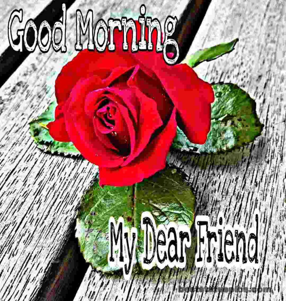 Rose pic with Good Morning My Dear Friend