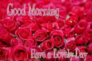 Romantic good morning have a lovely day with red rose
