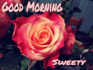 Good Morning Sweety With a Rose for girlfriend