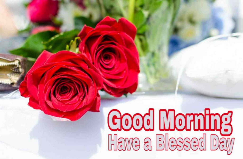 Rose image with Good Morning Have a Blessed Day