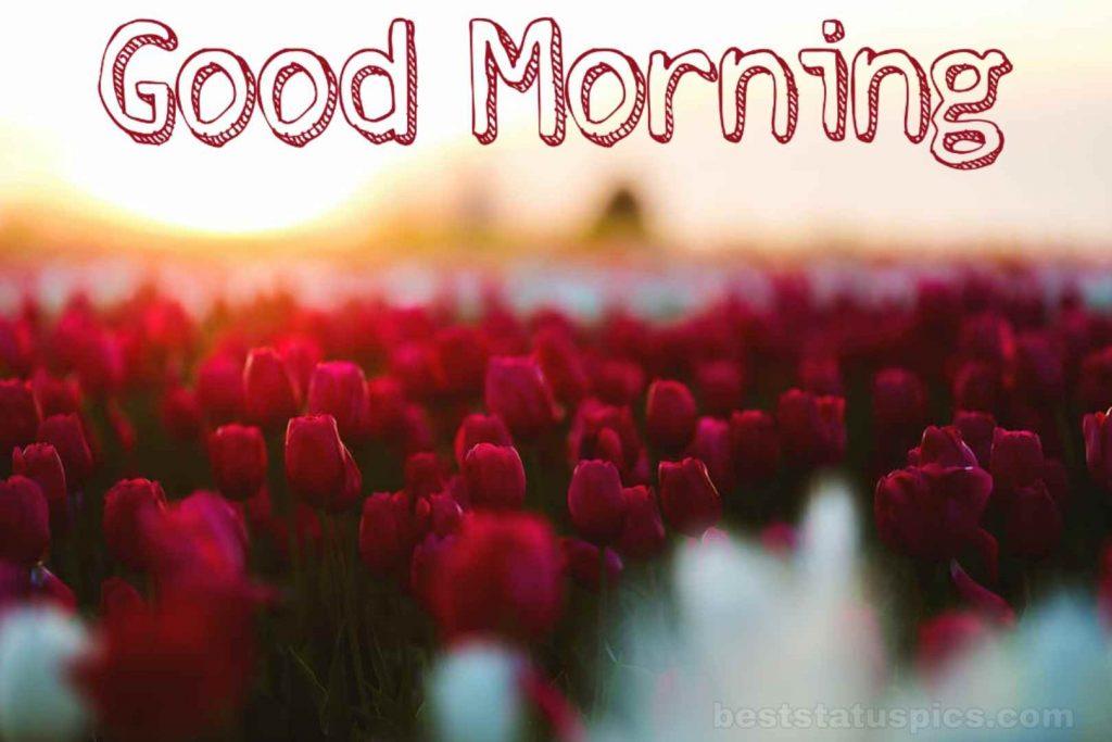 Good Morning Roses Garden Pic for Friends