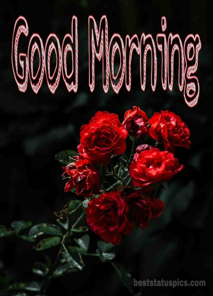 Good Morning Rose Pictures for Friends