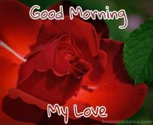 Good Morning My Love with Rose for a lover