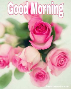 Good morning with pink rose image for whatsapp