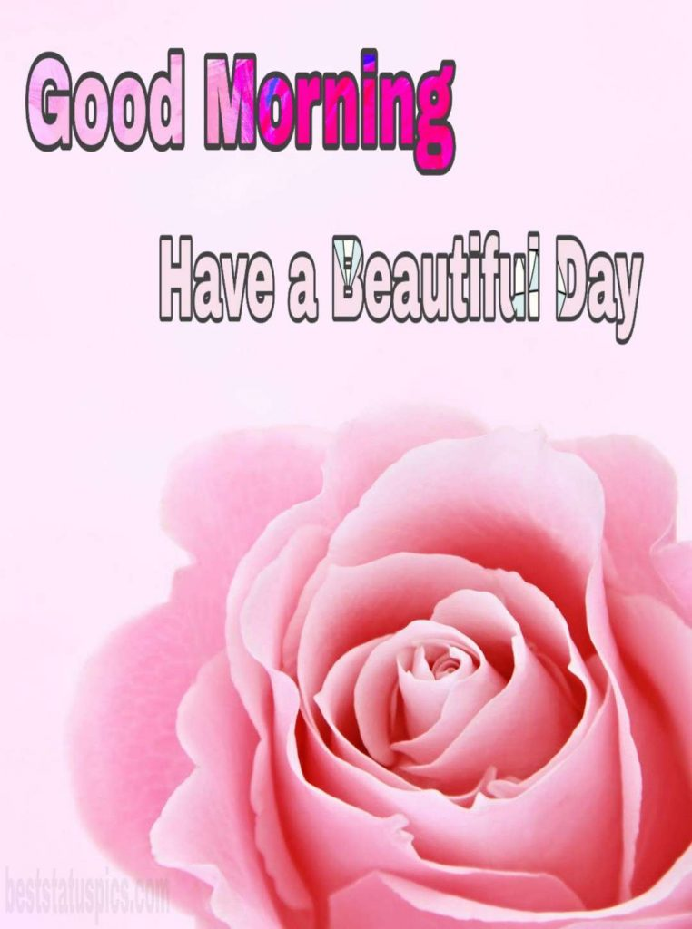 Good morning have a beautiful day with pink rose pic