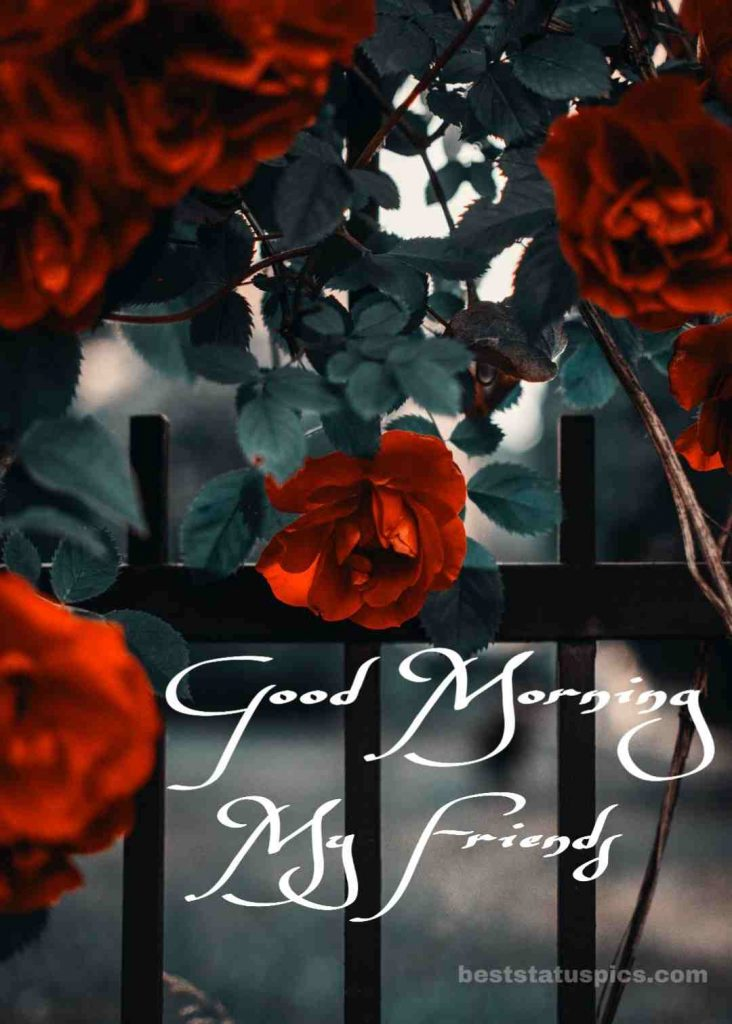 Cute good morning red rose garden image