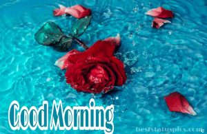 Beautiful Good morning image with red rose in water