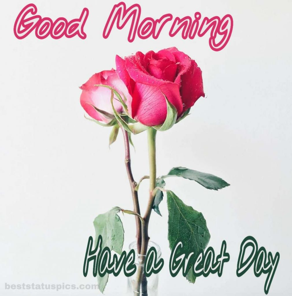 Beautiful Good morning have a great day with pink rose photo for whatsapp dp status