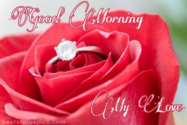 Good-Morning-Romantic-Rose-Images-For-Whatsapp_dp-Status