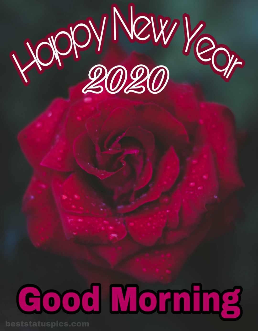 Good Morning Happy New Year 2020 Whatsapp Dp Status Images