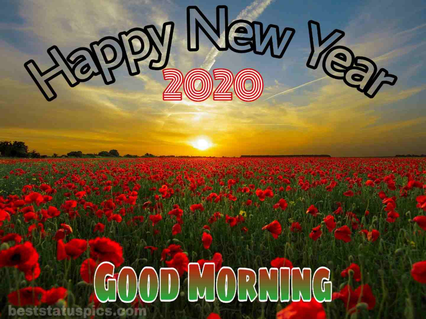 Good morning happy new year 2020 with roses
