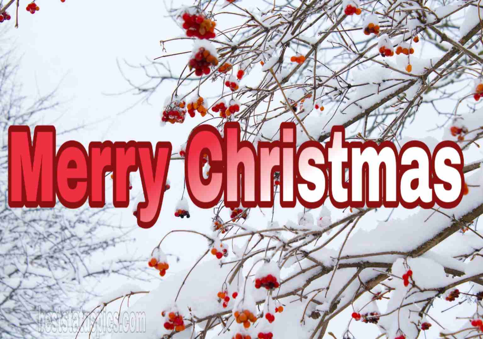 Best Merry Christmas wishes 2019 Greeting
