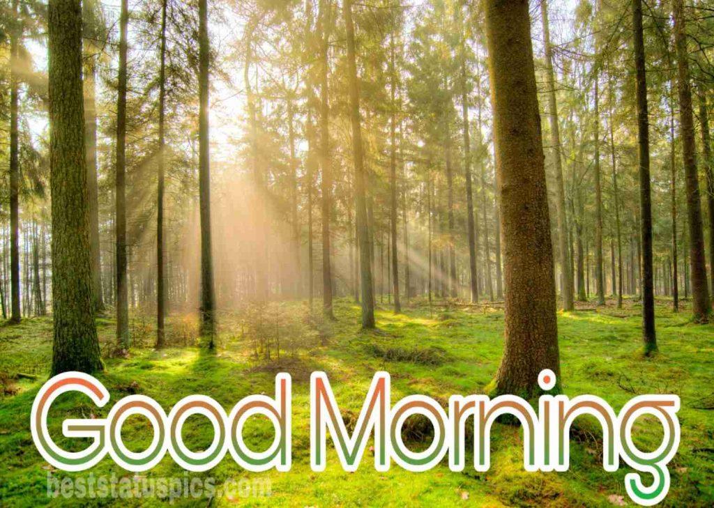 Good morning sunrise hd tree image