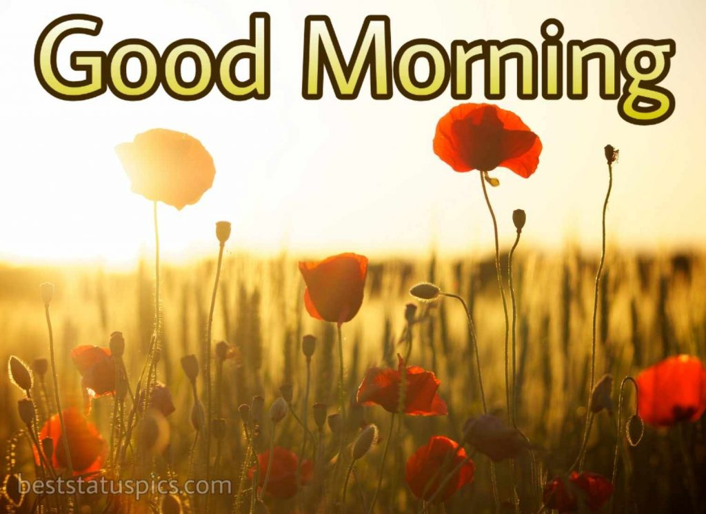 Good morning images of sunrise with love flower