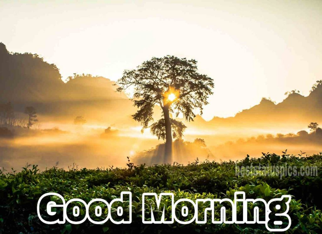 very good morning images sunrise and nature
