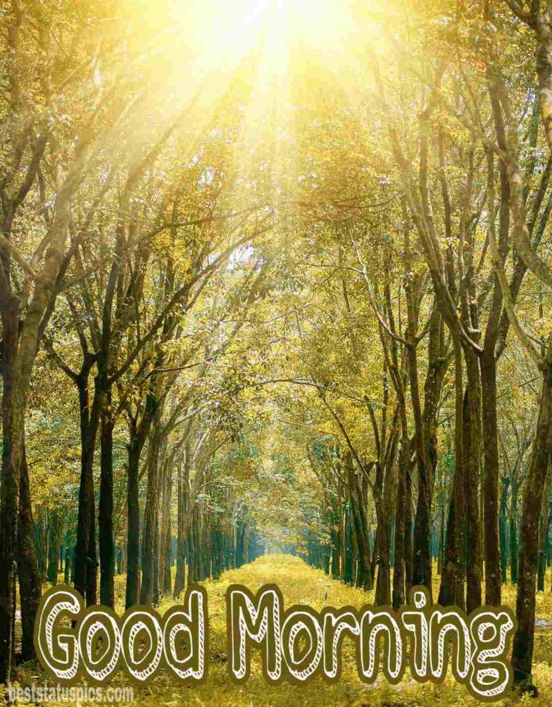 Good morning sunrise pics free