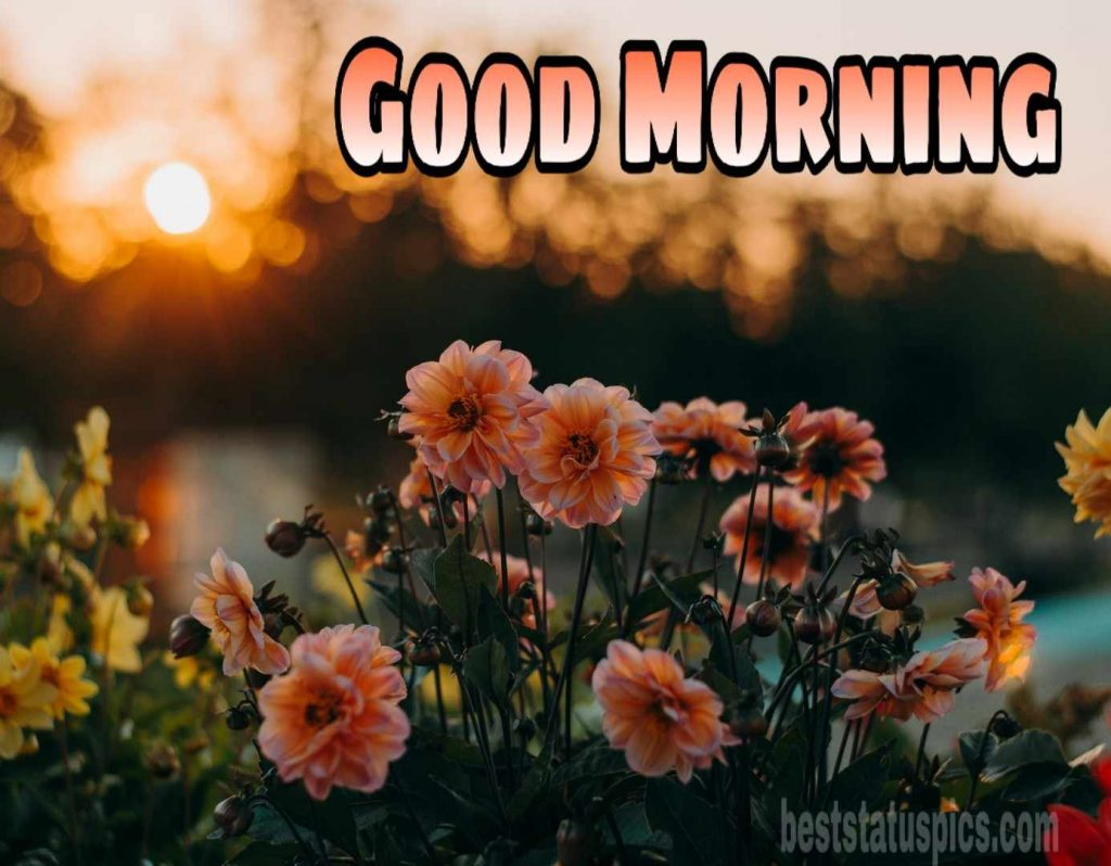 Good morning sunrise and flower images with quote