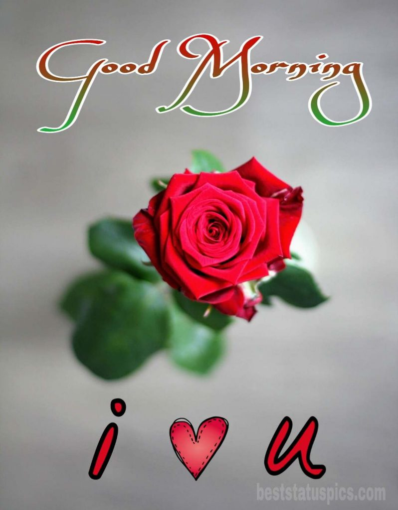 I love you good morning image