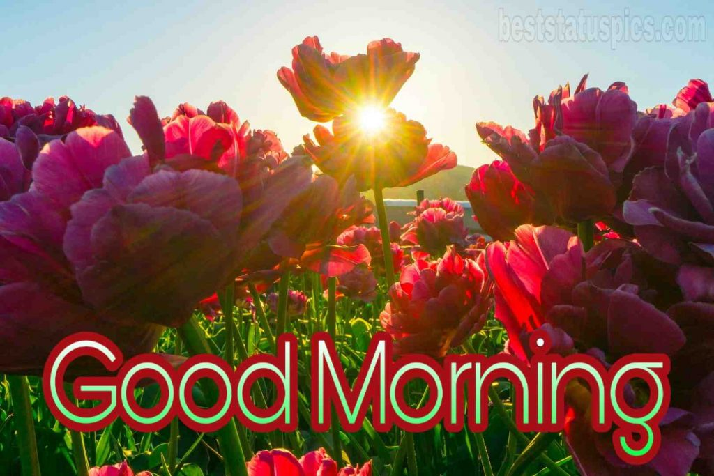 Good morning red flowers image