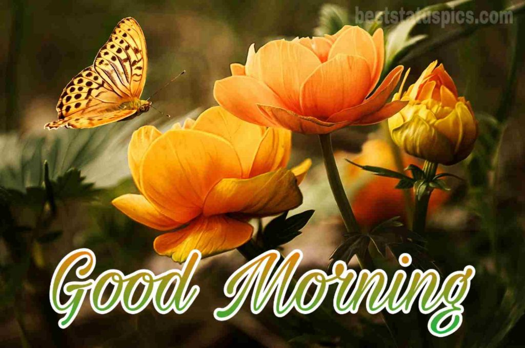 Good morning butterfly and yellow rose flowers