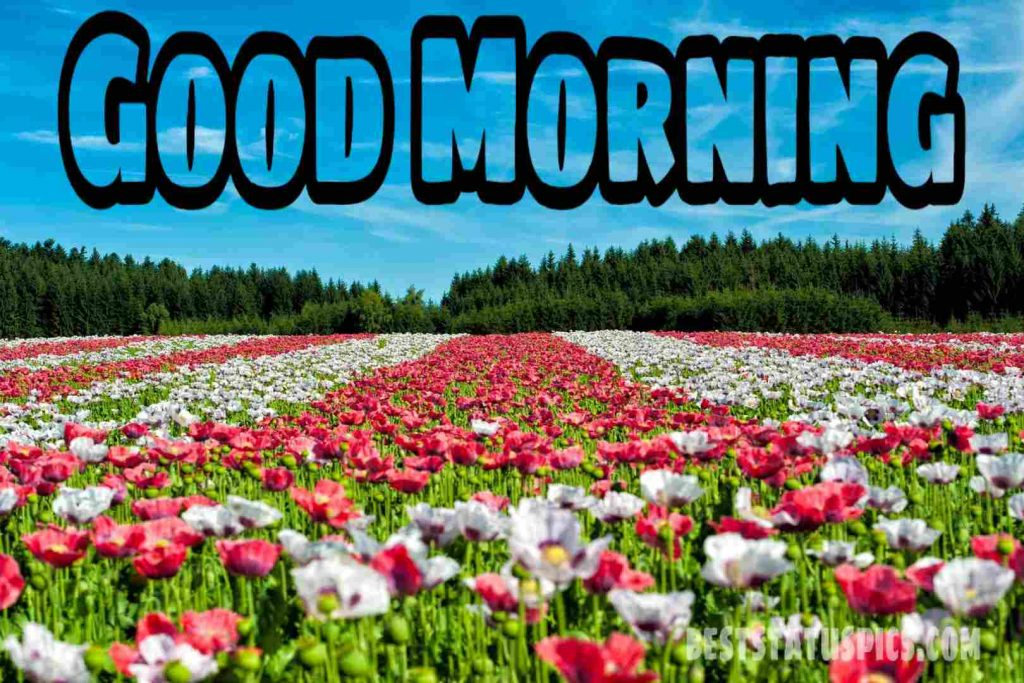 Good morning flowers garden image