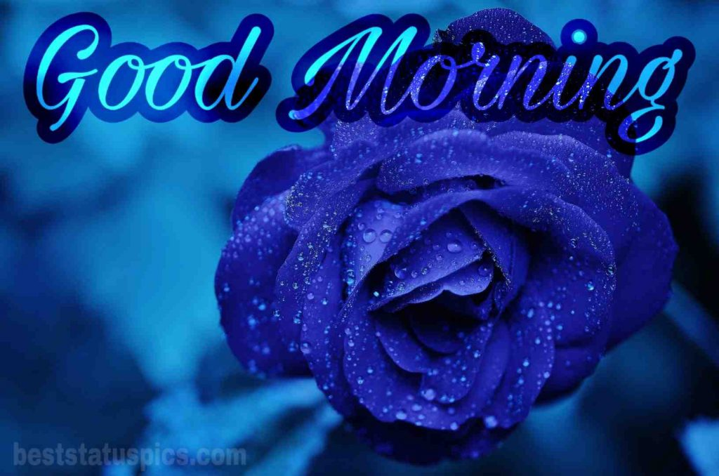 Good morning blue rose flower image hd