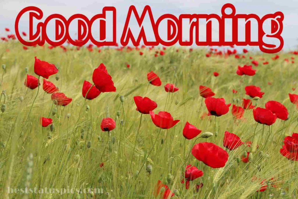Good morning nice red flowers image