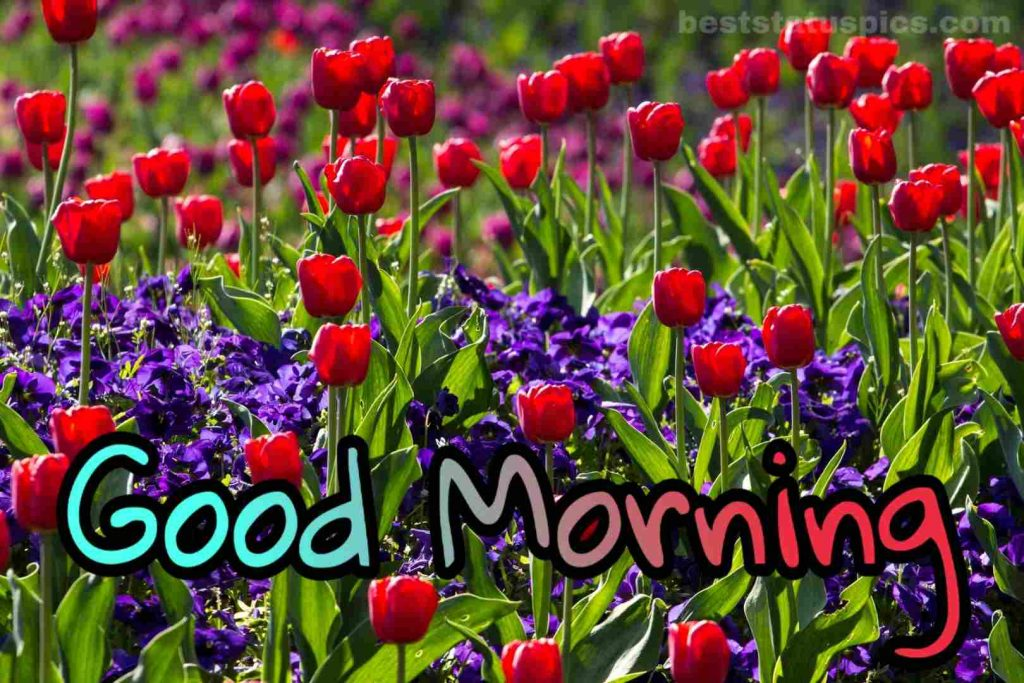 Good morning images natural flowers