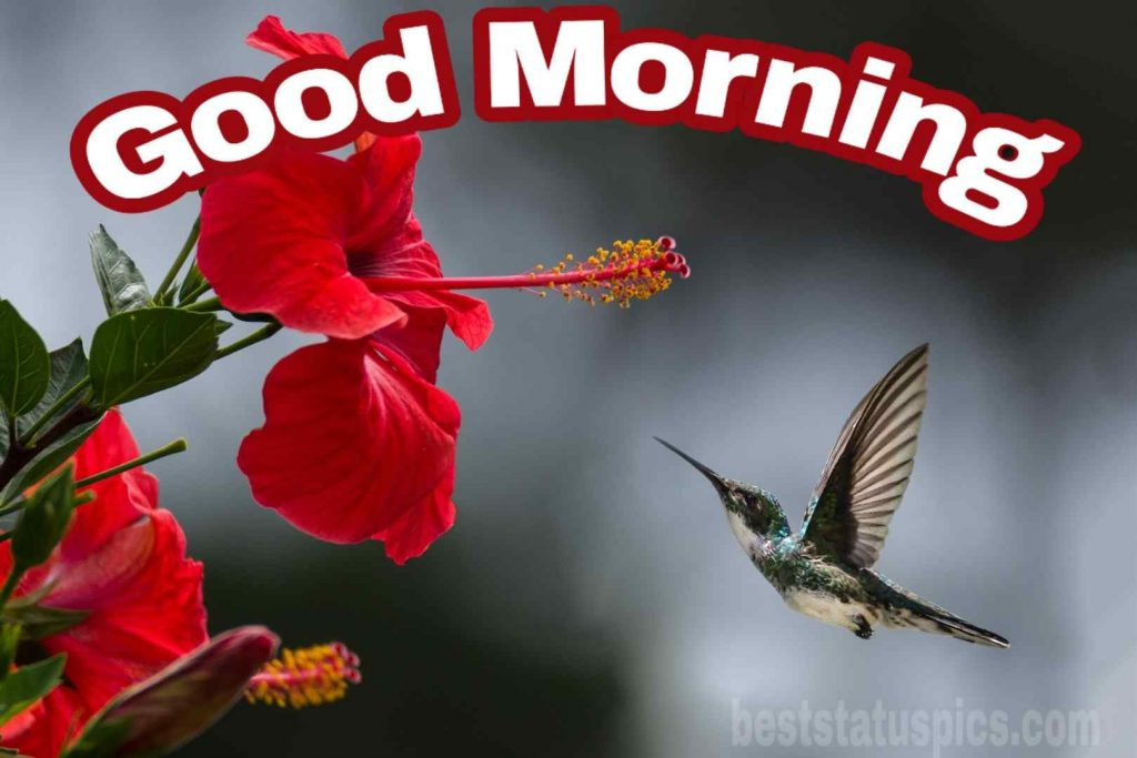Good morning with Bird and China rose mallow flower image