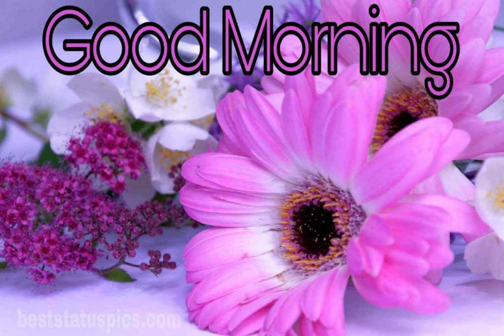 Good morning purple flower image whatsapp status