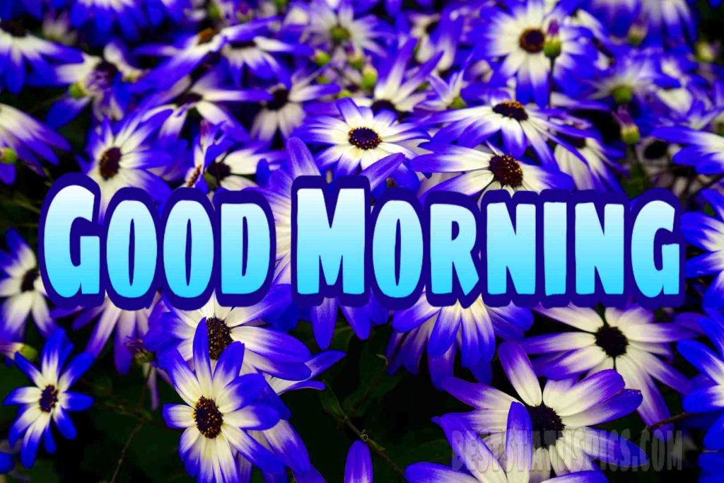 Good morning blue white flower image