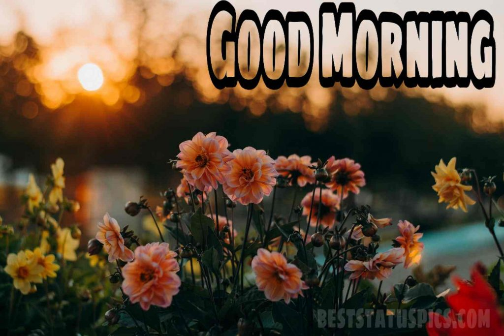 Good morning orange flowers pictures free download