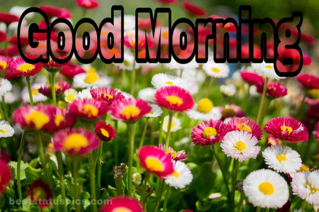 Good morning wish image special flowers