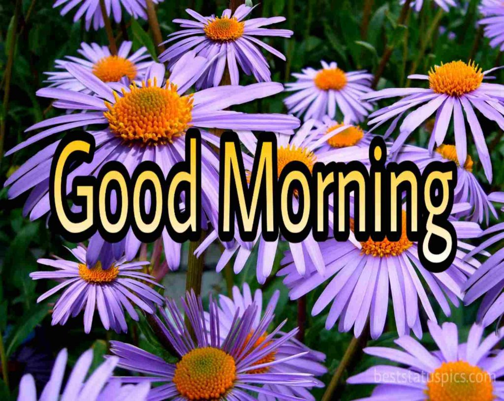 Good morning purple blue flowers image