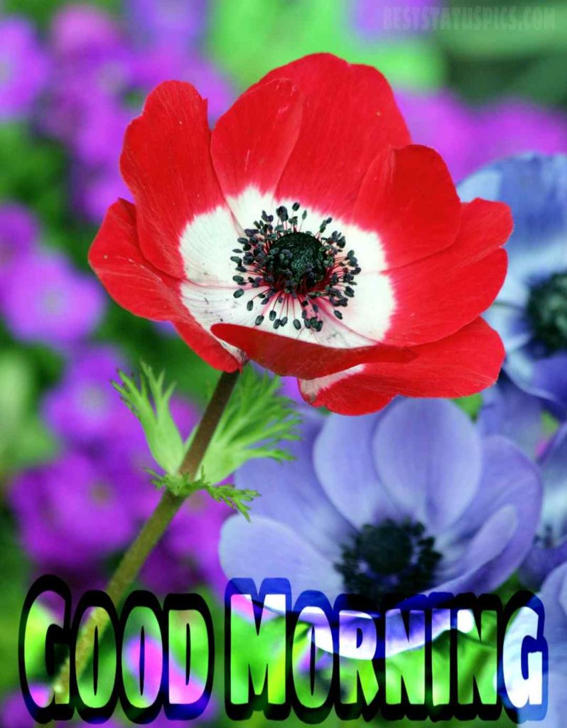 Good morning nice red flower image
