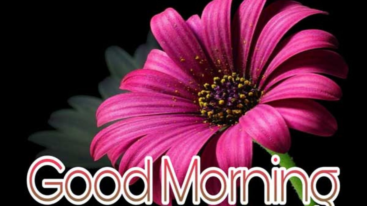 101 Good Morning Images With Beautiful Flowers 2021 Best Status Pics