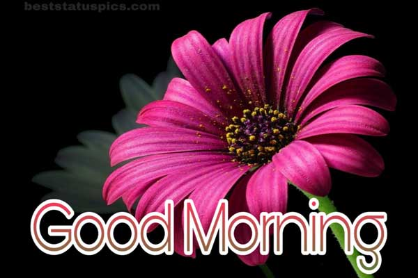 Good morning images with flowers featured