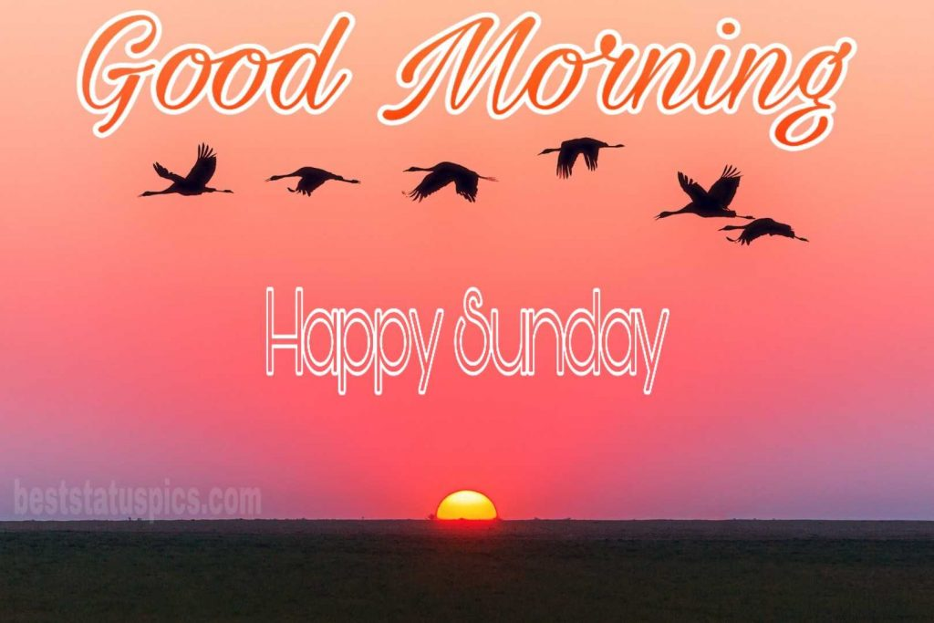 Good morning happy sunday bird nature image