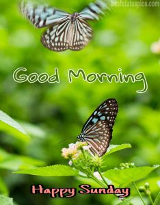Good morning happy sunday butterfly whatsapp dp