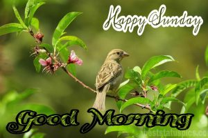 Good morning happy sunday with bird, nature and leaves images for whatsapp dp