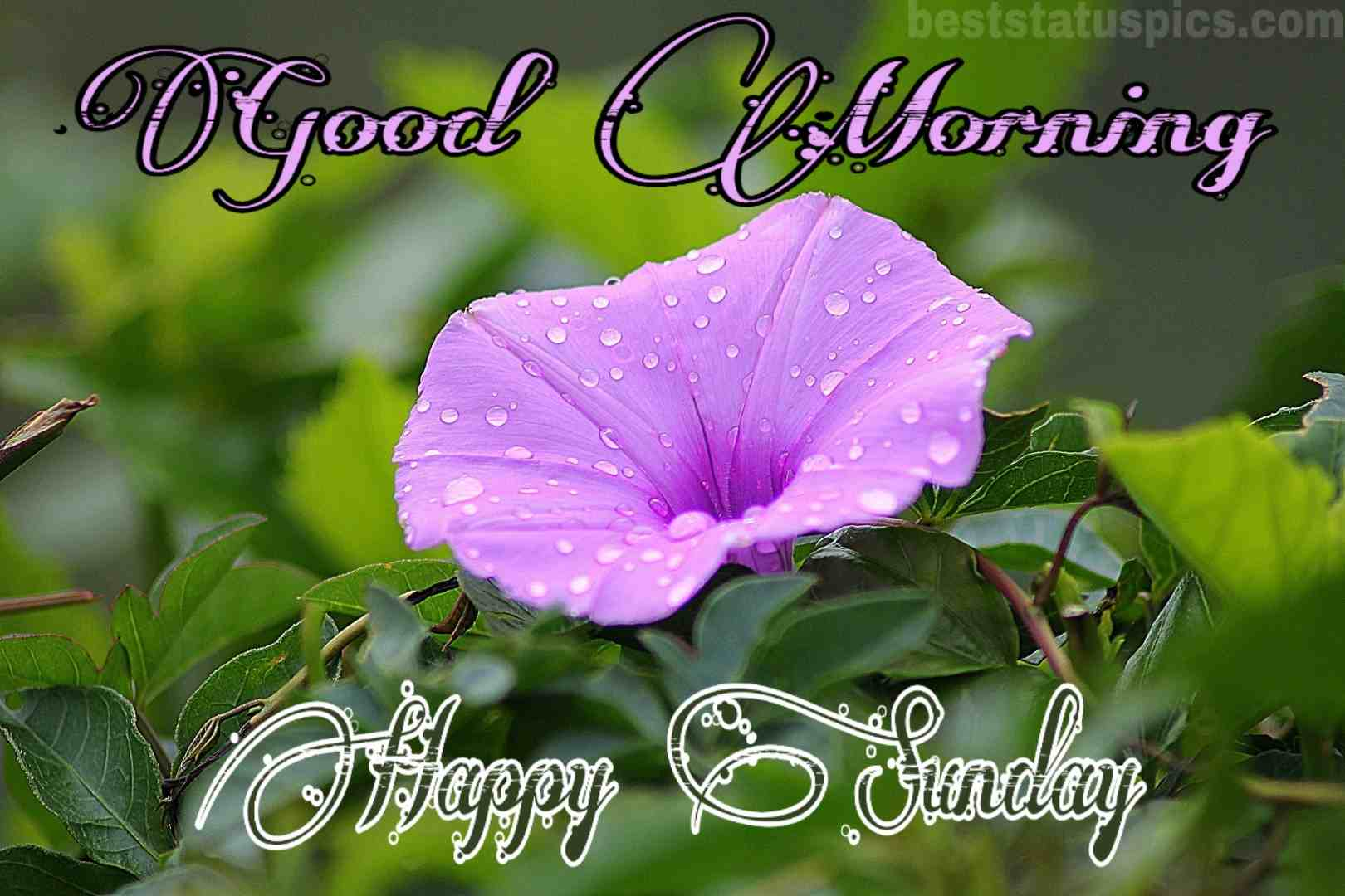 Good Morning Happy Sunday Images For Whatsapp Dp 2020 Best