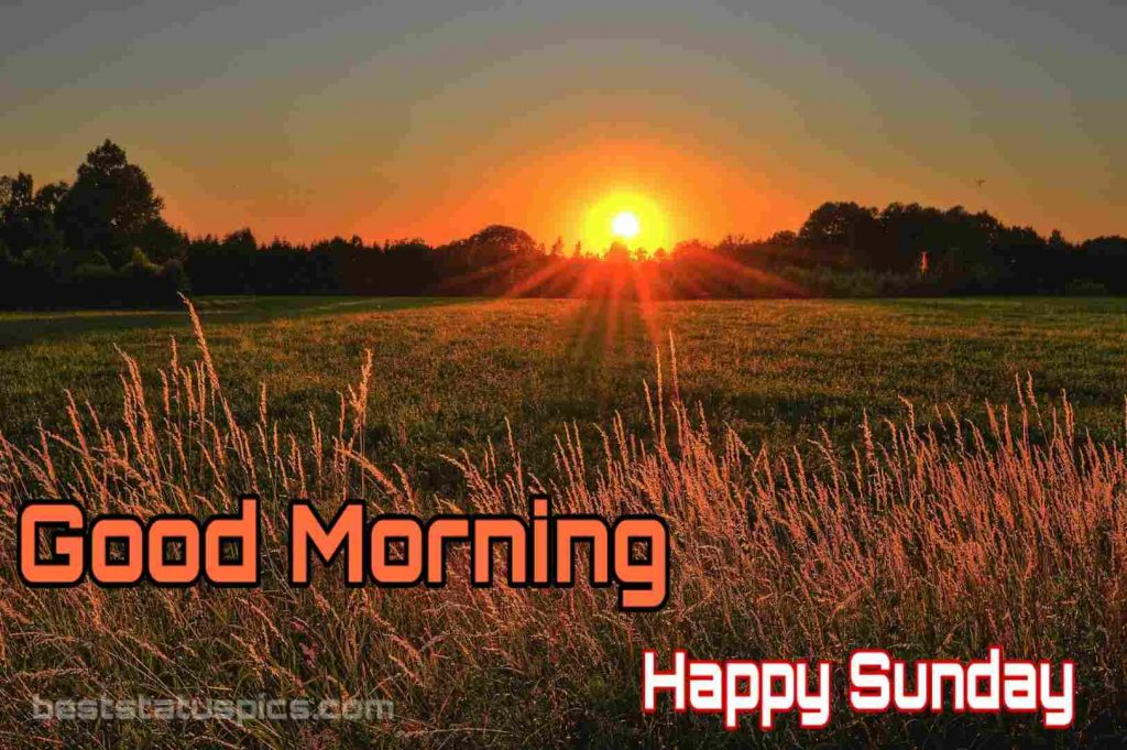 Good morning happy sunday nature image