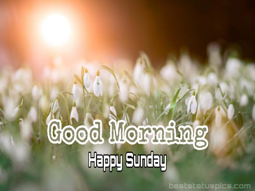 Good morning happy sunday friend image