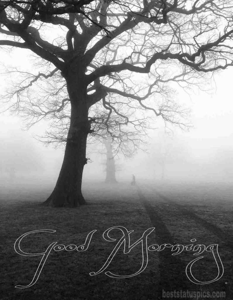 Foggy Winter Good Morning Picture