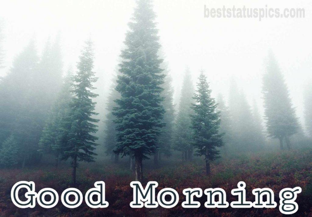 Good morning winter foggy image