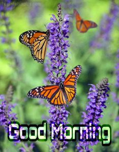 Good morning nature with butterfly image