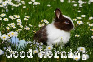 Sweet good morning nature with rabbit image